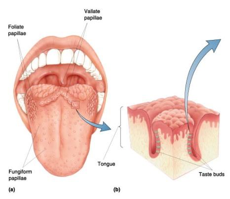 topikal kortikosteroidlerin yan etkileri