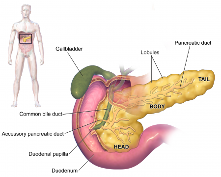 Structure of digestive system