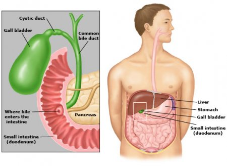 Physiology of the gallbladder