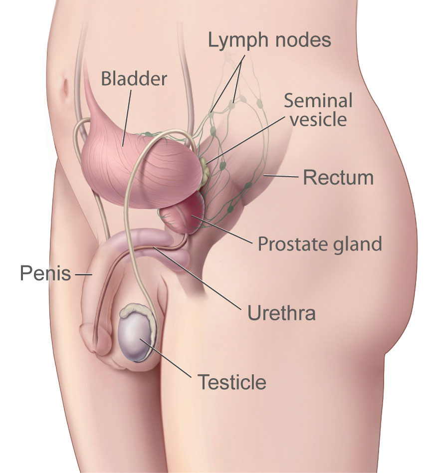 sex after removal of prostate gland