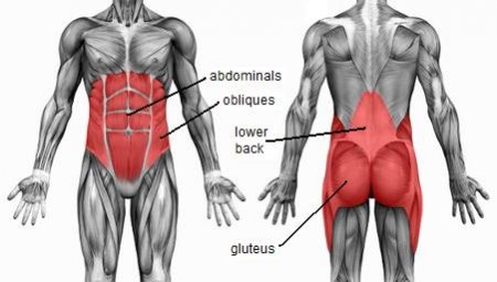 The muscles of the abdomen, lower back, and pelvis