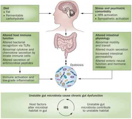 Intestinal Dysbiosis